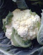Welkom in de virtuele groentetuin, groenten kweken,telen,zaaien,planten,bemesten,en oogsten