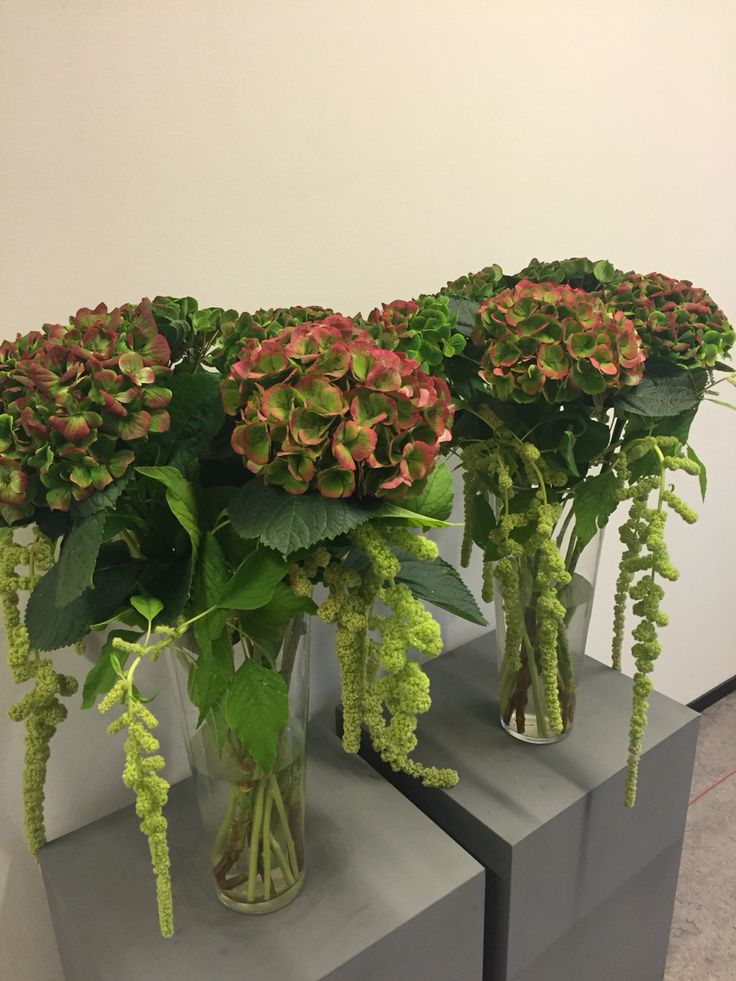 Favorite creation #hydrangea #amaranthus