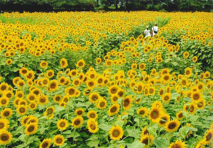 flower festival♡