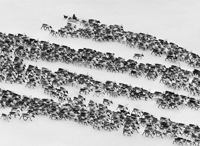 セバスチャン・サルガド   ロシア極北地方の先住民族・ネネツ, シベリア 2011.