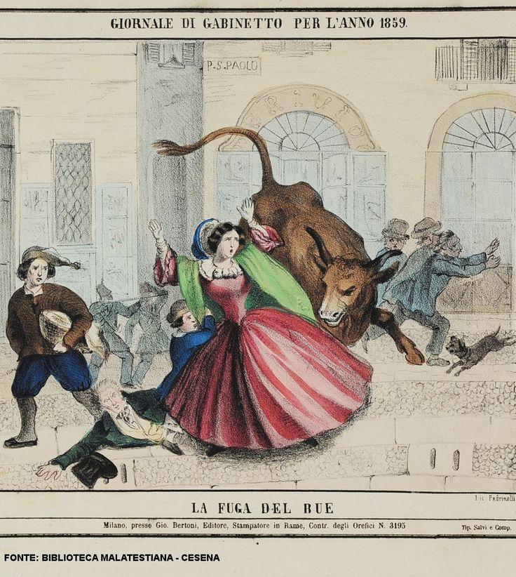 1859 La fuga del bue / the escape of the ox