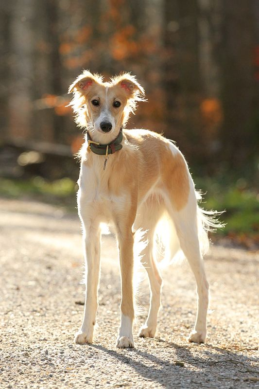 Regal Names For Boy Dogs