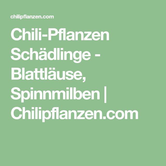 Chili-Pflanzen Schädlinge - Blattläuse, Spinnmilben | Chilipflanzen.com