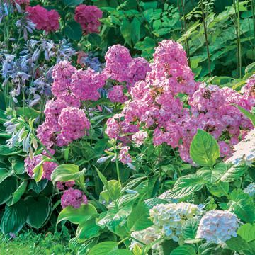 Schmetterlingsgarten Gardening Pinterest