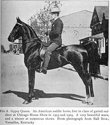 The American Saddlebred, formerly known as the American Saddle Horse, is a breed of horse that was developed in Kentucky by plantation owners.