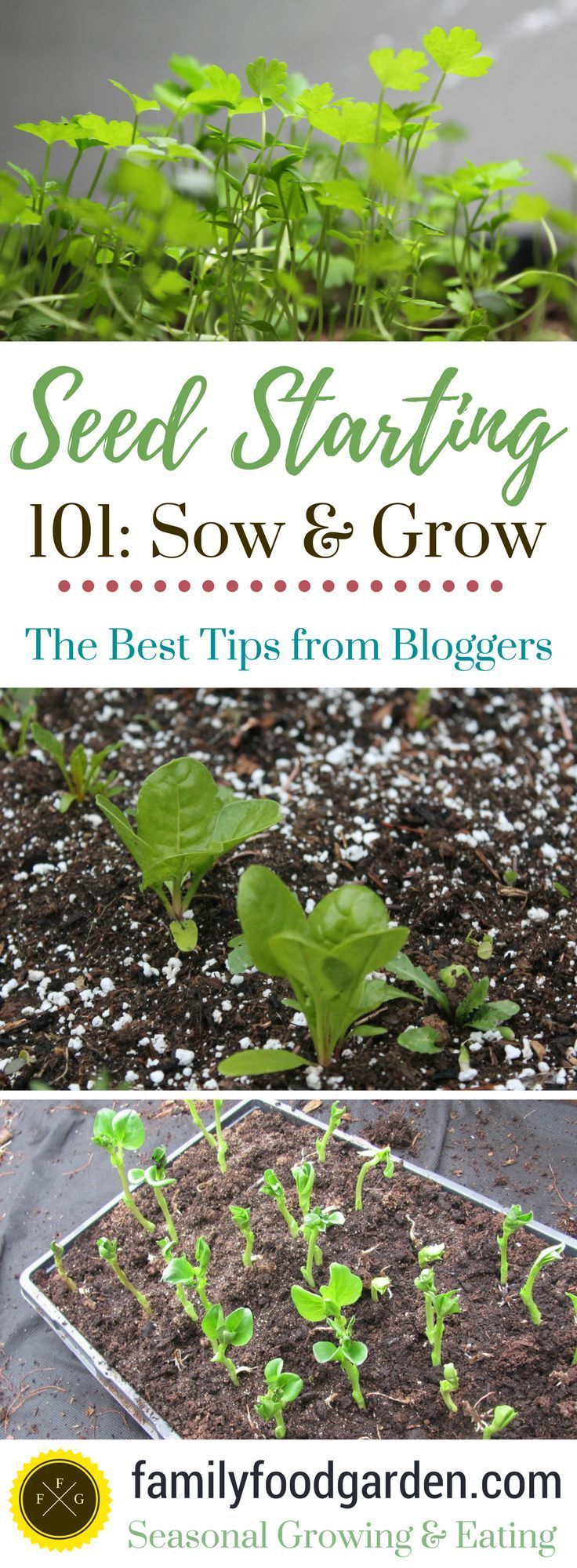 Seed starting 101 direct sowing transplants tips more seed starting gardens and organic - Organic gardening practical tips ...
