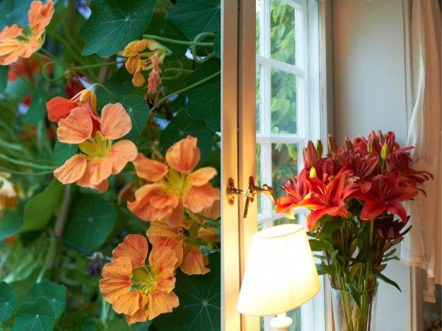 der Juni in Blumen