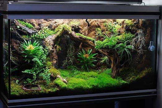 Vivarium design by Dr. Terrarium.