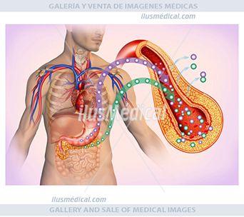 Ilustración relación entre la insulina y la glucosa. La glucosa es azúcar, un componente esencial de ....