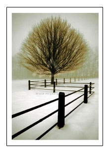 Solitude by Winston:  http://www.tajonline.com/gifts-to-india/gifts-NFA217.html?aff=pintrest2013/