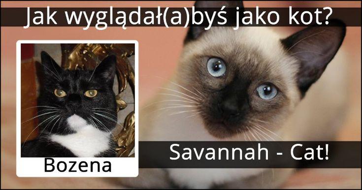 Jak wyglądał(a)byś jako kot?