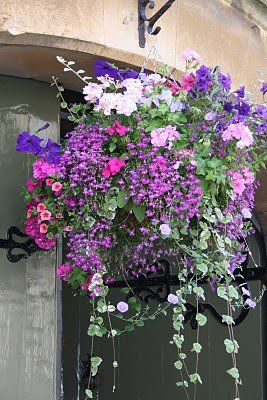 When my husband took me to Niagara Falls, I couldn't get over these HUGE hanging flower baskets.