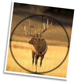 If you want to get all the scoop on how to plan the perfect Elk hunt in Colorado, then this is the guy........he knows his stuff:-) http://rockymountainelkguide.com/guide/ #elkhuntingcolorado
