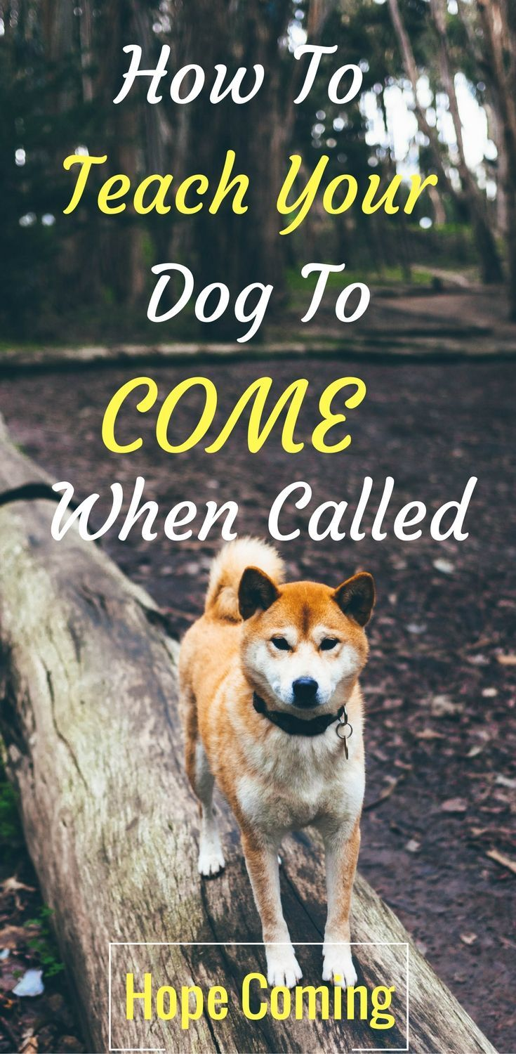 How to teach your dog to come when called   Ultimate Guide to Puppy Recall   Basic Puppy Training   Obedience Training   more at http://hope-coming.com/