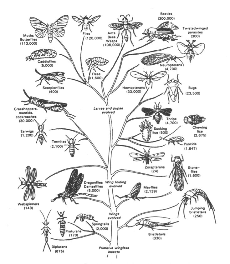 insect tree