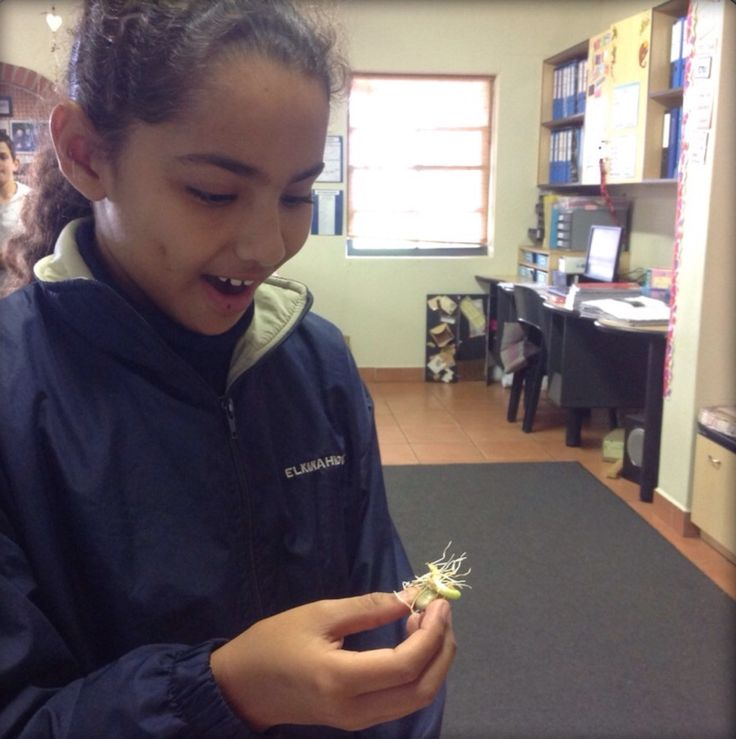 Growing Beans, Learning About Plant Reproduction |
