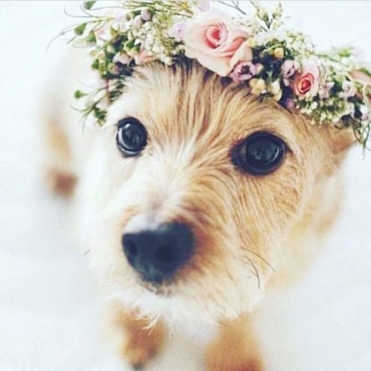 www.lesleycutlerbridalwear.co.uk #dog #wedding #flowergirl #flowercrown