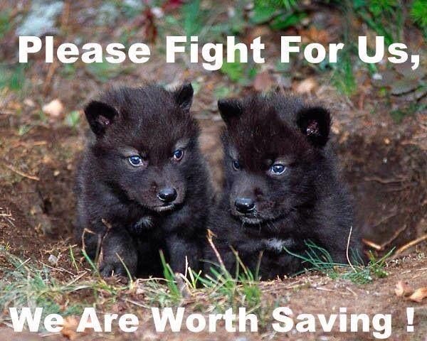 schuh plumbing Save wolves