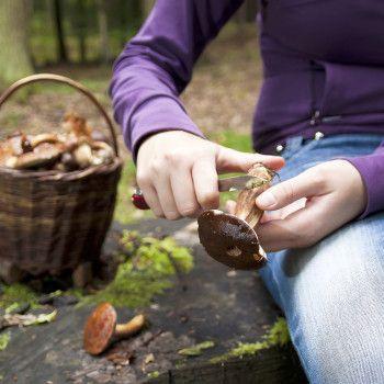 Pilze putzen für Essigpilze im Glas