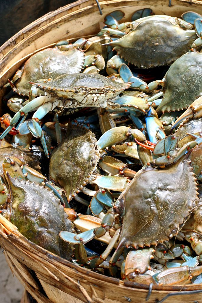 basket of blues (crabs), South Carolina