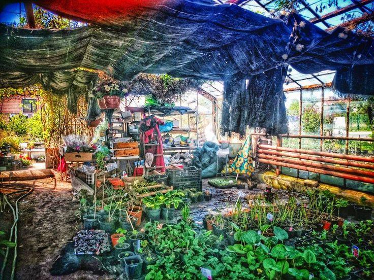#szczecin #farm #sonyphotography #z2 #colors #likepainting #experiaz2 #greenhouse #ecology #eco #mess #chaos #beauty #greens #food #aliceinwonderland  #art3dd #garden #kadamin #iloveszczecin #stettin #floatinggarden
