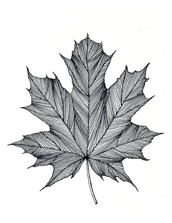 Maple Leaf Print of original Black or Green Pen and by Bigbrainart