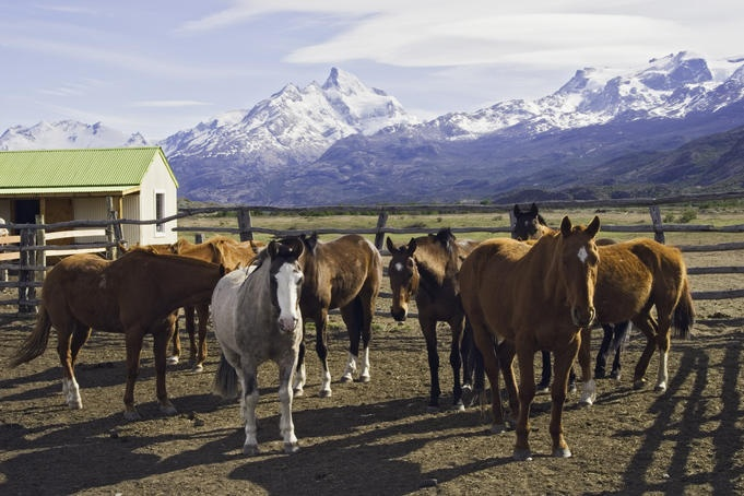Ride on an estancia in Argentina