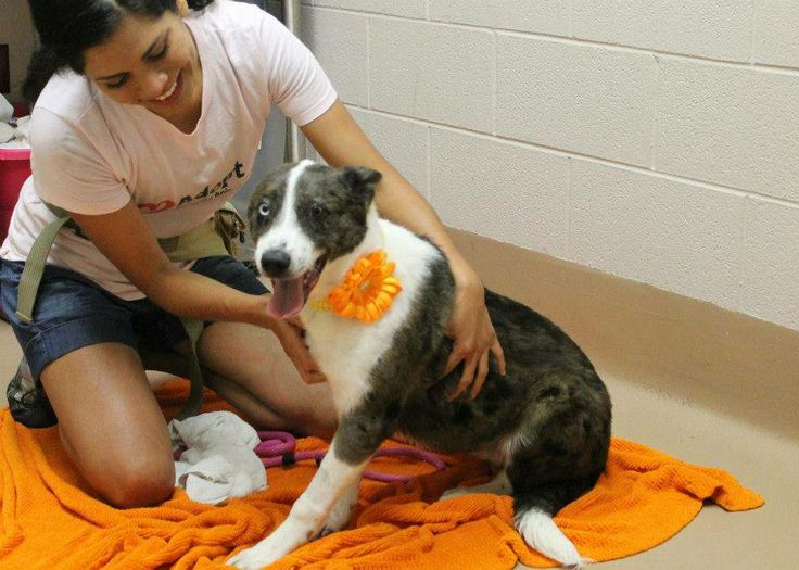 I'm Soho and I am a 7 month old Catahoula mix. It takes a