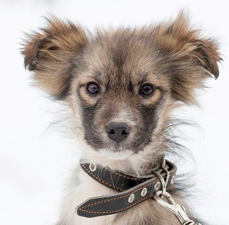 Ein Susses Hunde Madchen Sucht Krefeld Tierheim Mischlingswelpe Uber 50cm Ausgew Deine Tierwelt De Tierheim Hunde Hunde Susse Hunde