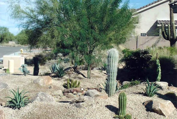 13 best images about desert gardens on pinterest gardens for Desert landscape design