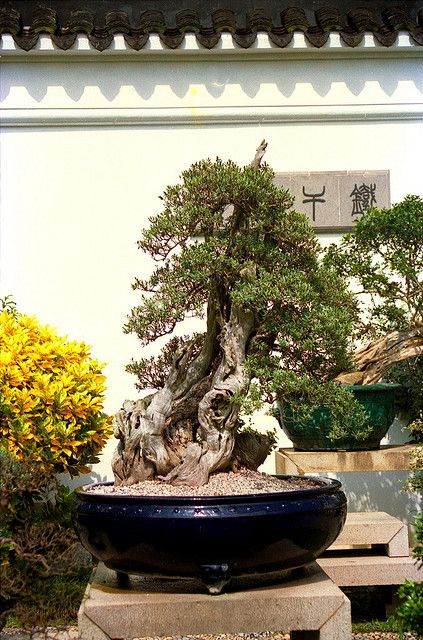 RK:Bonsai II, Suzhou-style Bonsai Garden,Singapore.   Flickr - Photo Sharing!