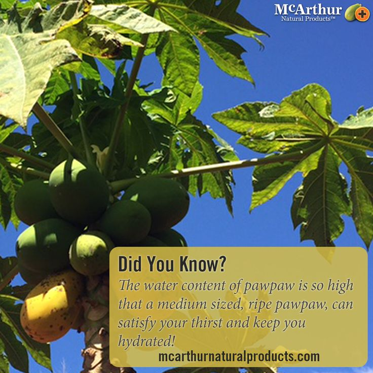 Did You Know? The water content of pawpaw is so high that a medium sized, ripe pawpaw, can satisfy your thirst and keep you hydrated!  #mnp #mcarthurnaturalproducts #pawpaw #papaya #papain #papaw #australiangrown
