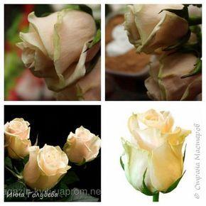 И снова всем привет,и снова я с розами, но в этот раз сорт Талея. Заодно и процесс отфоткала) Листики на фото живые. Свои еще не одела в них) фото 17