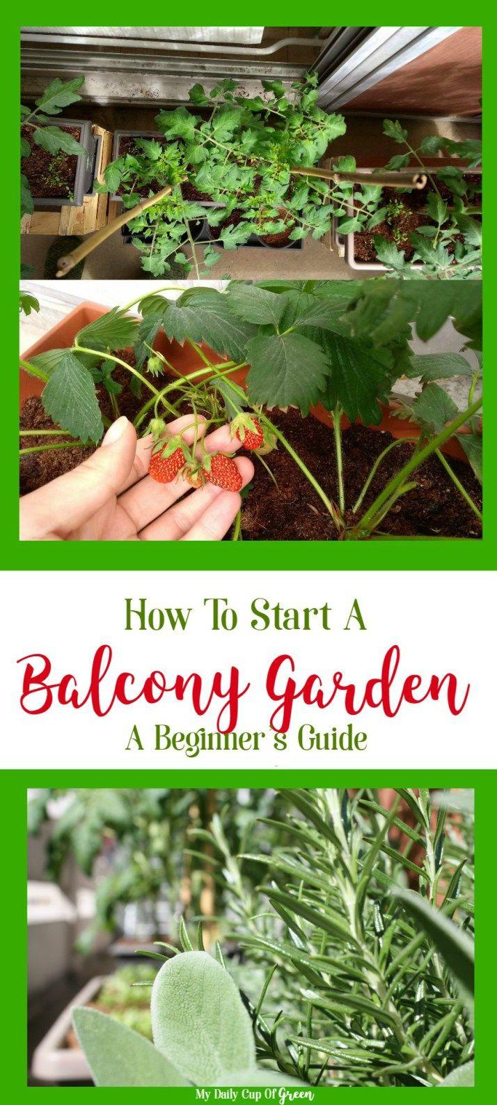 How To Start A Balcony Garden A Beginner's Guide