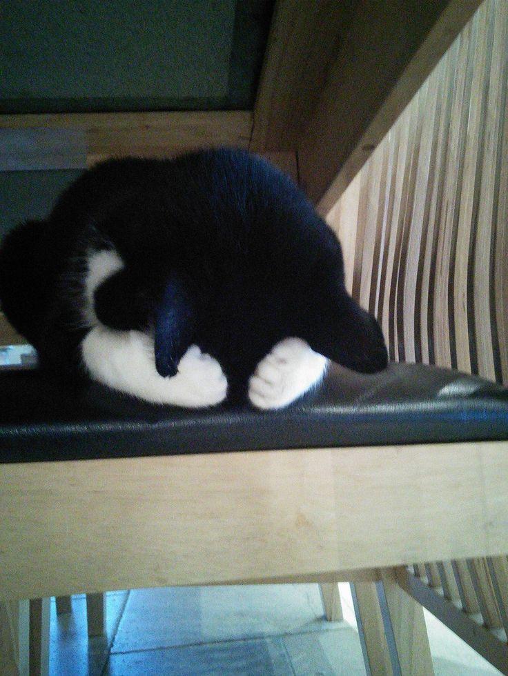 Laissez-moi dormir, nom d'un chat !