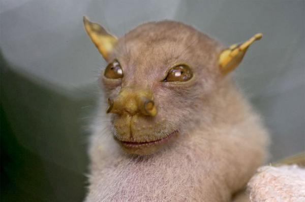 Não, não é ilusão de ótica, nem um ser alienígena. Simplesmente, existem animais que não são tão fofinhos - muito pelo contrário. Confira 7 animais assustadores:
