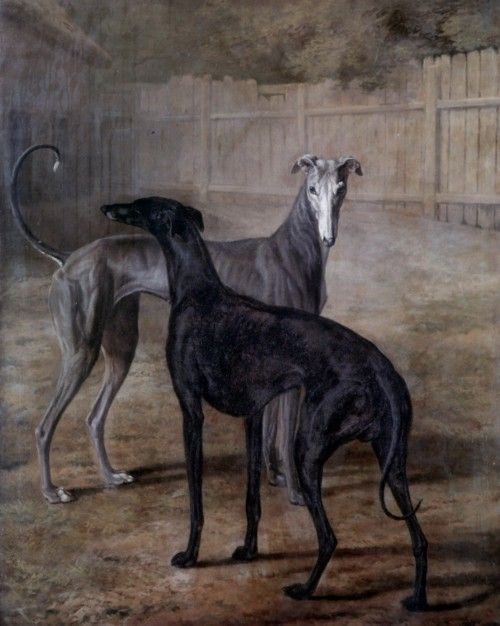 Jacques-Laurent Agasse, Rolla and Portia (1805)  Actually Greyhounds I think, rather than whippets...