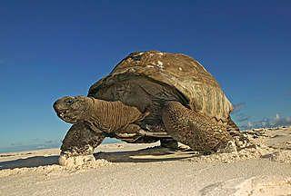 Overige schildpadden