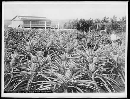 Post-annexation, Hawaii's economy and demographic changes were fueled by American agricultural interests.