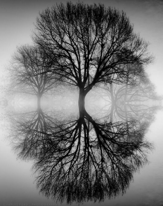 Black and white photograph || trees