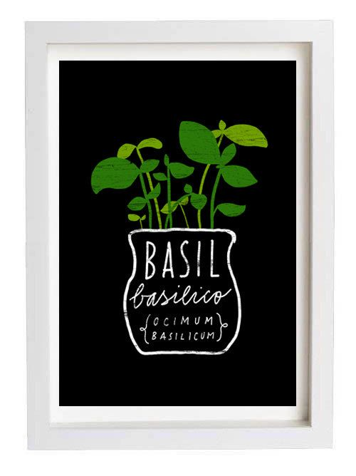 Basil Italian Herb Mediterranean Green Kitchen Art Print  by anek