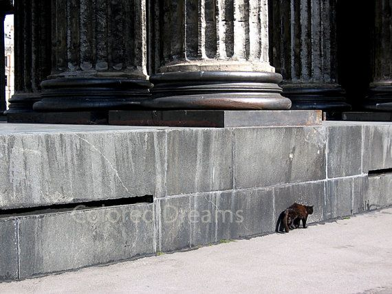 Black cat and columns photography architectural by LoveBeadJewerly