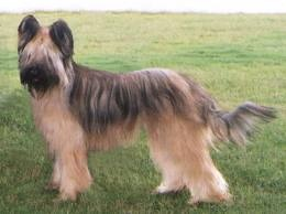 Briard-a big heart wrapped in fur:) My all time favorite dog breed