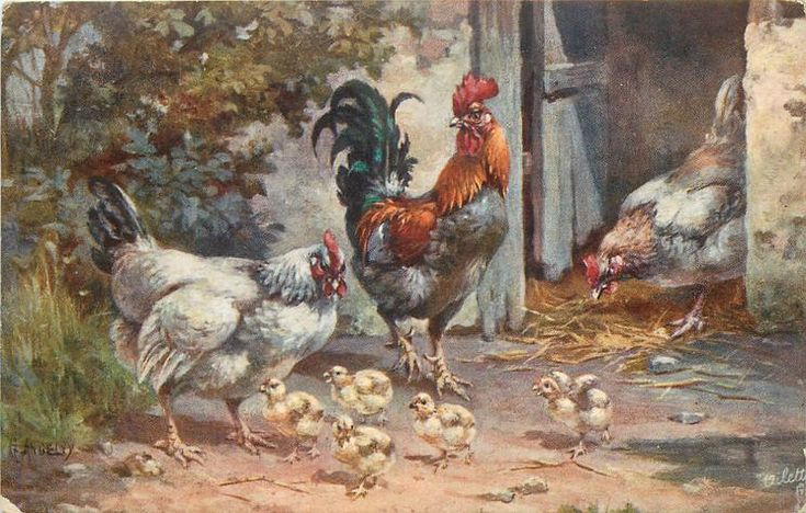 rooster between two hens, five chicks