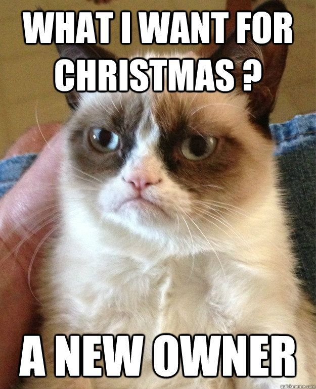 "Grumpy Cat is making his Christmas list ~""what I want for Christmas?... a new owner"""