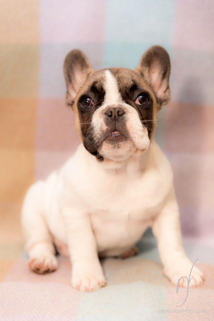 mascota - pet - perro - dog - naserfoto - www.naserfoto.com - foto - photo