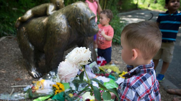 Harambe the gorilla's death: Stop asking 'Where were the parents?' - LA Times