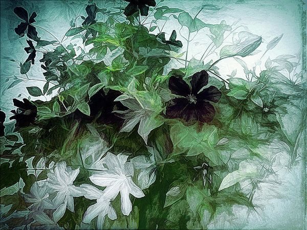 Clematis On The Vine Art Print by Leslie Montgomery.  All prints are professionally printed, packaged, and shipped within 3 - 4 business days. Choose from multiple sizes and hundreds of frame and mat options.