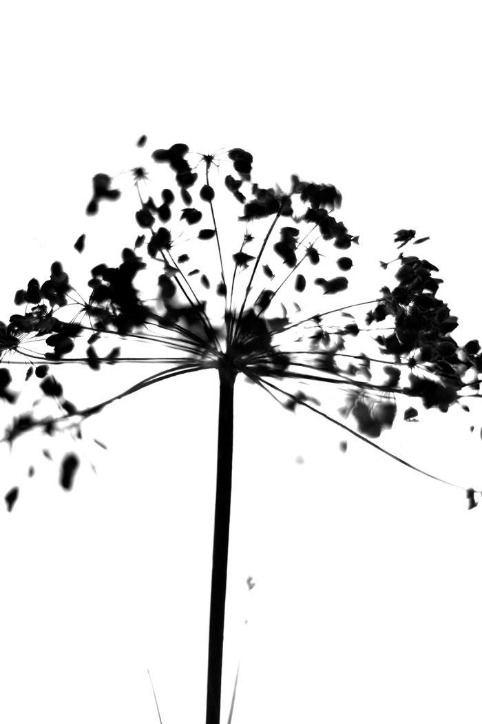 Black & white | landinskan