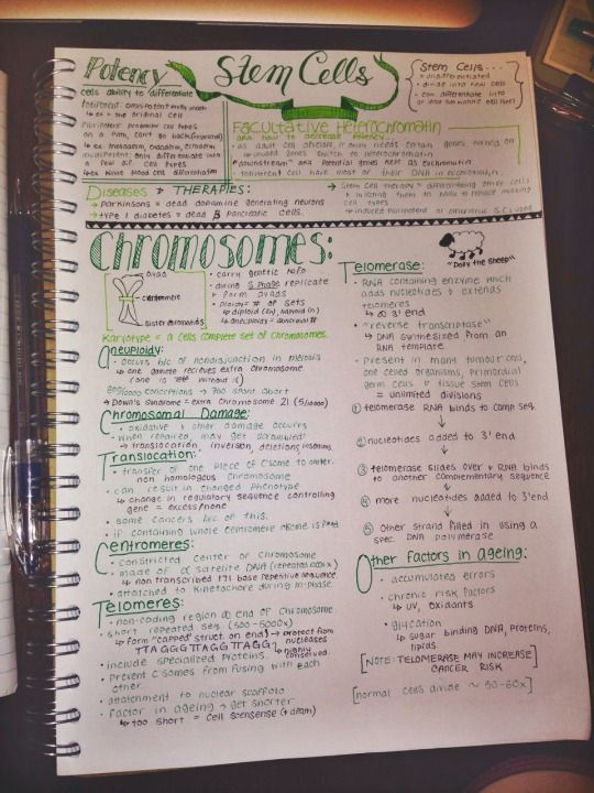 some rather green summary notes for cell bio.